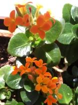 Orange for second chakra