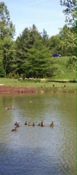 Ducks enjoying