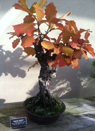 Bonsai in Brooklyn Museum