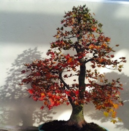 Brooklyn Bonsai at the Museum