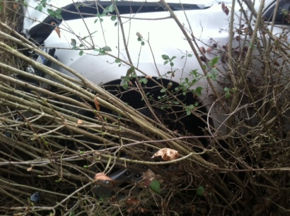The car in the hedge