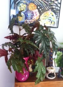 Winter plant leaves