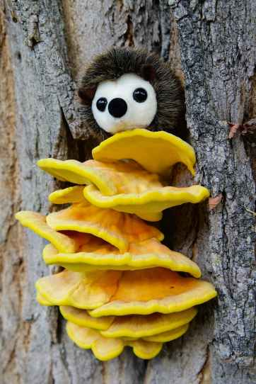 nature-tree-tree-bark-mushroom.jpg